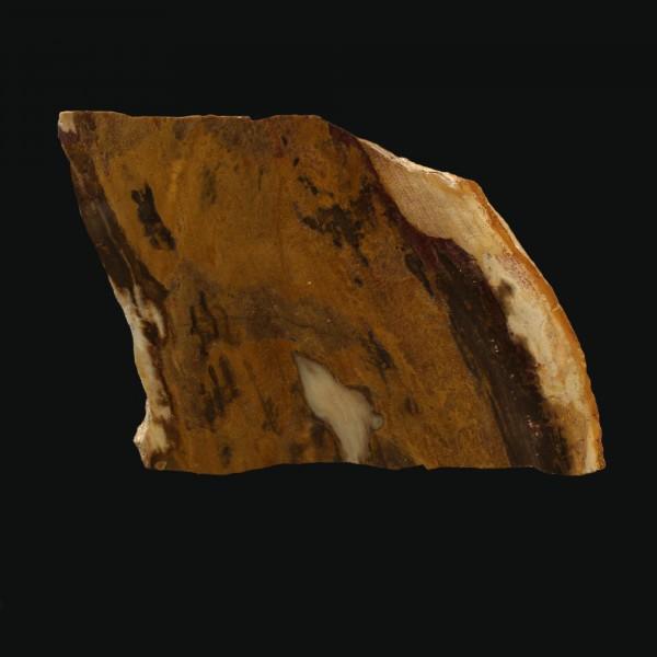 Versteinertes Holz - Polierte Scheibe